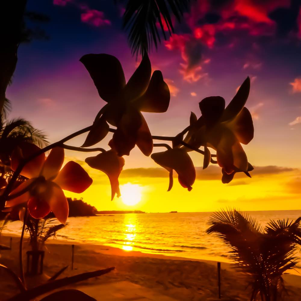 Island flowers silhouetted against sunset
