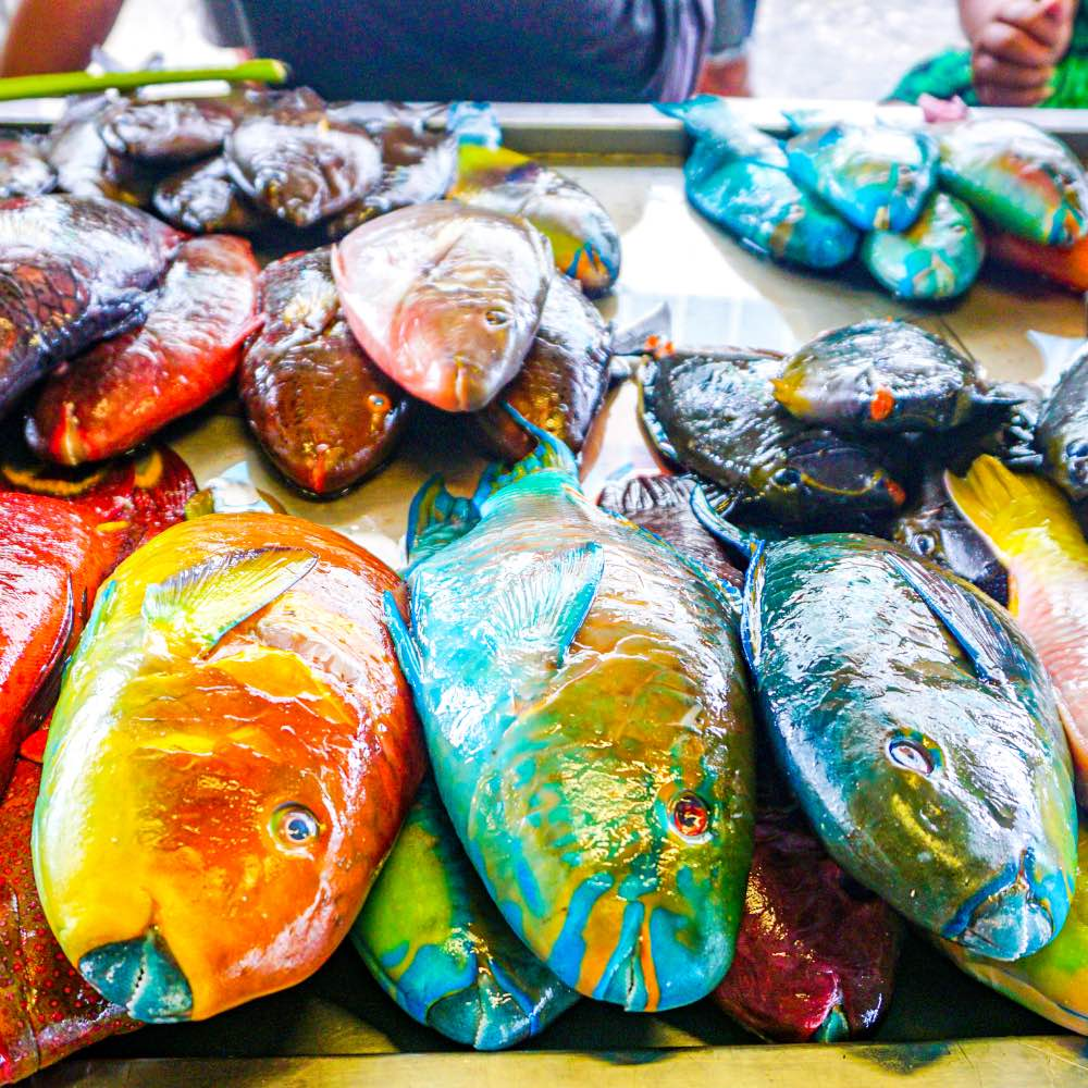 Fresh caught colorful fish
